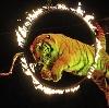 Цирки в Володарском